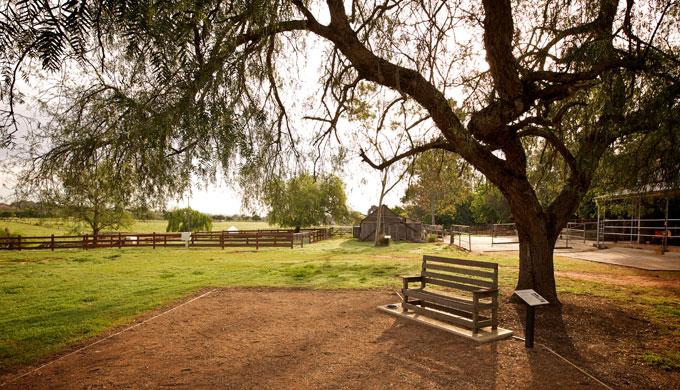 things to do camden town farm